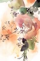 Rosy Rose IV Framed Print