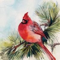 Cardinal VI Fine-Art Print