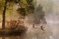 Goose Fight Fine-Art Print