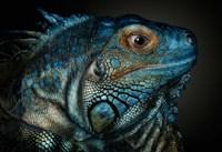 Dragons Are Awake Fine-Art Print
