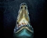 Jaws Fine-Art Print