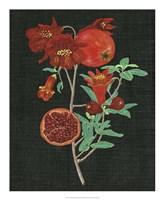Pomegranate Study I Fine-Art Print