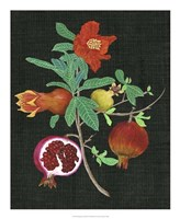 Pomegranate Study II Fine-Art Print
