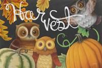 Harvest Owl IV Fine-Art Print