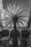Palermo Fine-Art Print