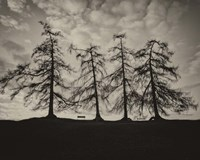 Park Trees Fine-Art Print
