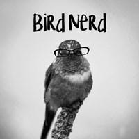 Bird Nerd - Hummingbird Fine-Art Print