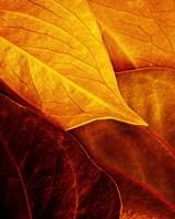 Leaves Fine-Art Print