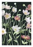 Anemone Dance I Fine-Art Print