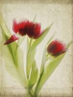 Parchment Flowers I Fine-Art Print