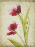 Parchment Flowers III Fine-Art Print
