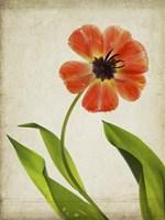 Parchment Flowers V Fine-Art Print