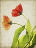 Parchment Flowers VI Fine-Art Print