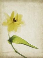 Parchment Flowers VII Fine-Art Print