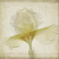 Parchment Flowers IX Fine-Art Print