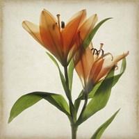 Parchment Flowers X Fine-Art Print