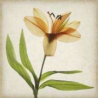 Parchment Flowers XI Fine-Art Print