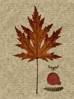 Autumn Leaf I Fine-Art Print