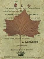Autumn Leaf II Fine-Art Print