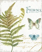 My Greenhouse Botanical III Fine-Art Print