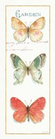 Rainbow Seeds Butterflies II Fine-Art Print