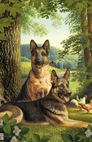 German Shepards/Chicken Fine-Art Print