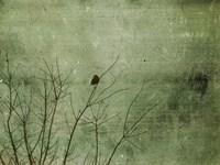 Blackbird Fine-Art Print