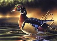 Backwoods Marsh Fine-Art Print