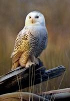 Snowy Owl On Dead Log Fine-Art Print