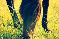 Horse in the Meadow I Fine-Art Print