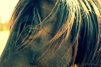 Horse in the Meadow II Fine-Art Print