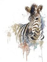 Water Zebra Fine-Art Print