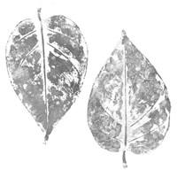 Silver Otono II  (silver foil) Fine-Art Print