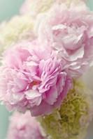 Soft Pink Blooms Fine-Art Print