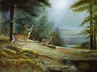 Mountaintop Retreat Fine-Art Print