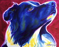 Border Collie - Bright Future Fine-Art Print