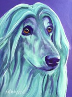 Afghan Hound - Aqua Fine-Art Print