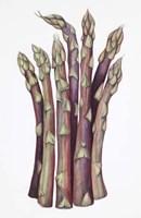 Asparagus Fine-Art Print