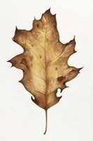 Black Oak Leaf Fine-Art Print