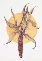Indian Corn Fine-Art Print