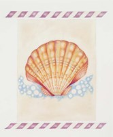 Shell Cardita Fine-Art Print