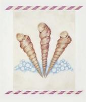 Shell Tri Terebra Fine-Art Print