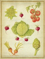 Les Beaux Legumes (The Beautiful Vegetables) Vintage Fine-Art Print