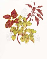 Coleus Collage Fine-Art Print