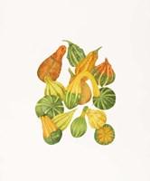 Heirloom Gourds Fine-Art Print