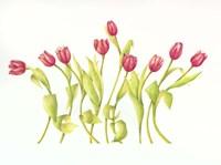 Nine Tulips Twirling Fine-Art Print