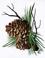 Pine Cone Fine-Art Print