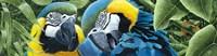 Blue & Yellow Macaws Fine-Art Print