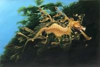 Leafly Sea Dragon Fine-Art Print