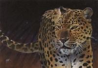 Leopard Fine-Art Print